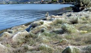 Aitoliko le spiagge del paese ricoperte da ragnatele