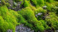 Antartide le foreste di muschio stanno morendo