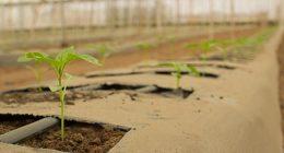 Agricoltura biologica ecco le sue caratteristiche