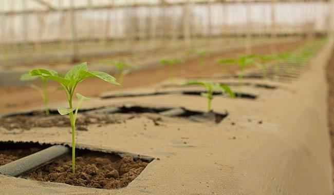 Agricoltura biologica, ecco le sue caratteristiche