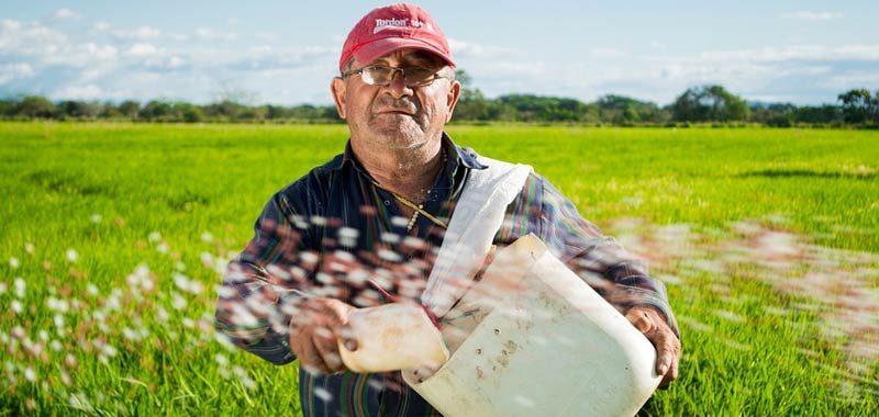 Rotazione delle colture modo intelligente per salvaguardare la fertilita della terra