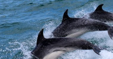 Toscana ecco perche sono morti ben 37 delfini
