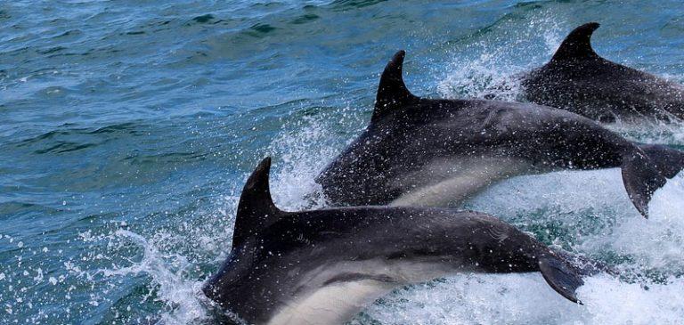 Toscana, ecco perché sono morti ben 37 delfini