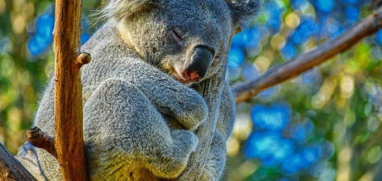 Sai che gli animali possono andare in ibernazione?