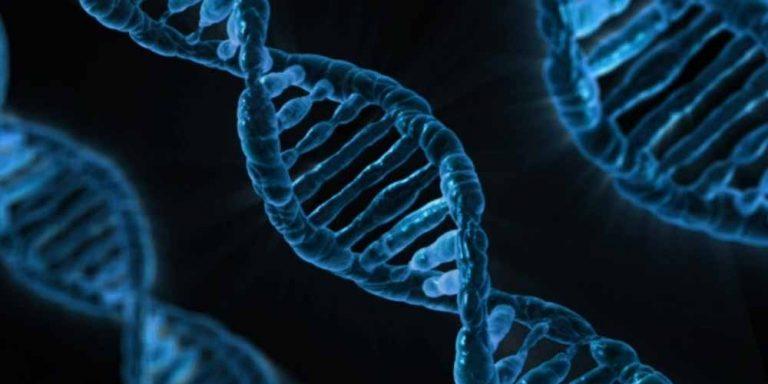Dopo la morte si attivano dei geni nel cervello